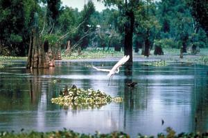 Drug Rehabs in Louisiana